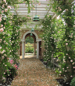 Roses surround an archway.